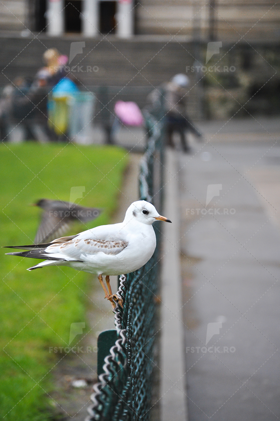 Seagull Perched on Fence in Paris